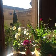 Flores mi balcón